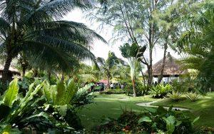 Golden Palm Tree territory